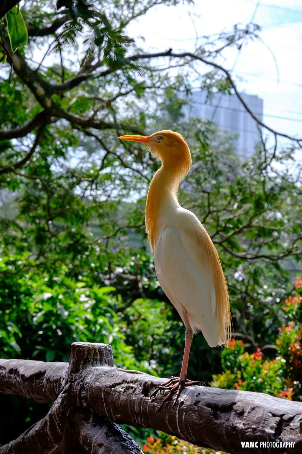 Bird Photography @ KL Bird Park
