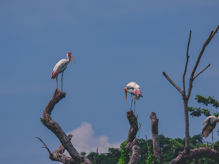 Bangau Zoo Negara