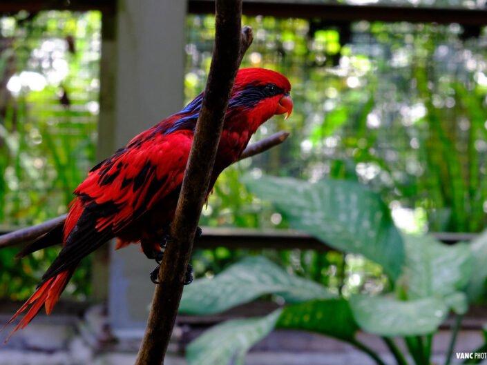 Parrot KL Bird Park - Bird Photography