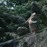 KL Bird Park Half Day Tour, Free Roaming Birds