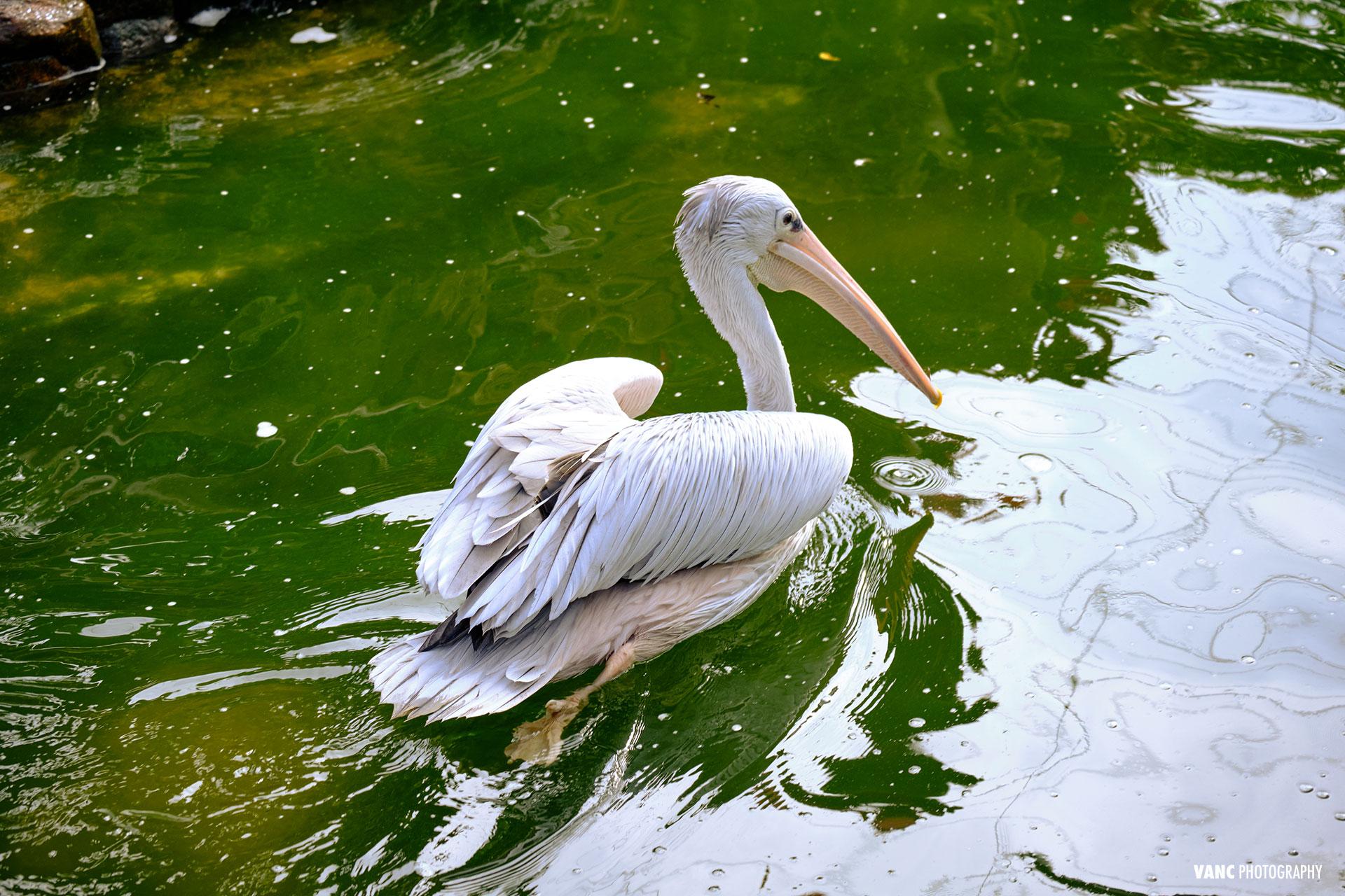 pelican kl bird park 2