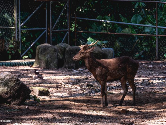 Deer Zoo Negara