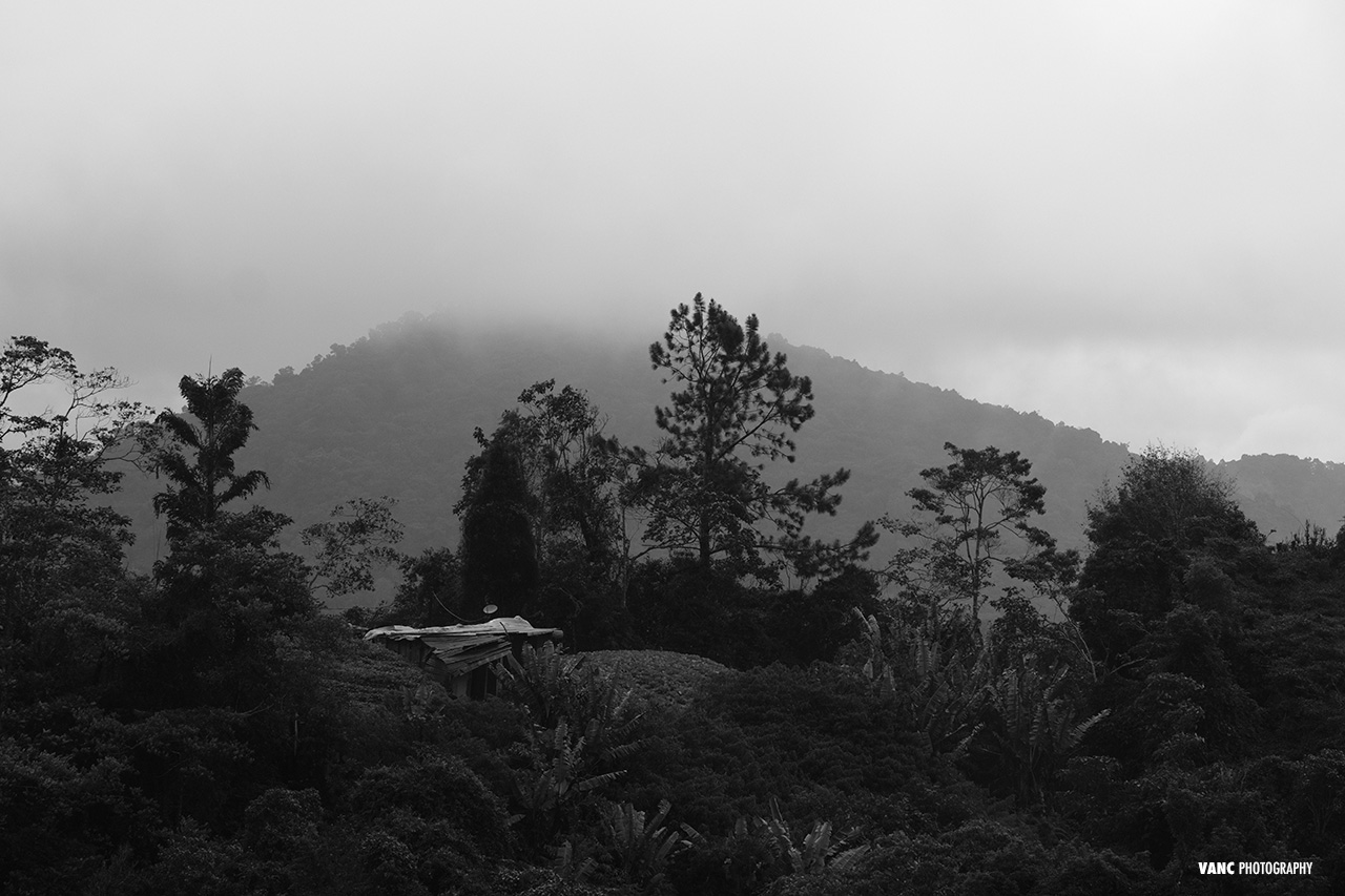 Black & White Landscape Cameron Highlands