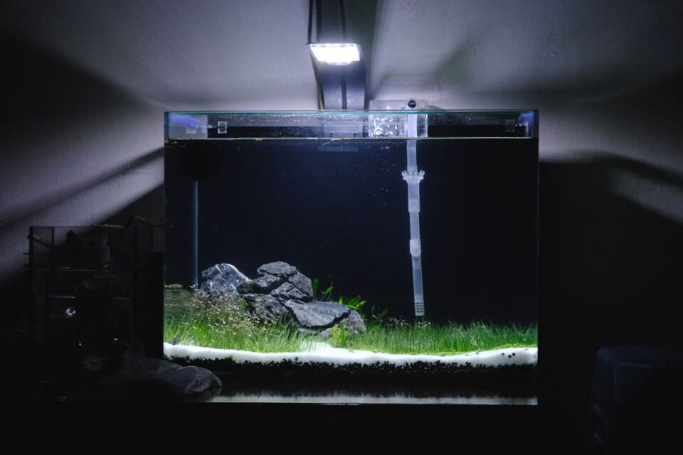 Betta Aquascape Aquarium Setup