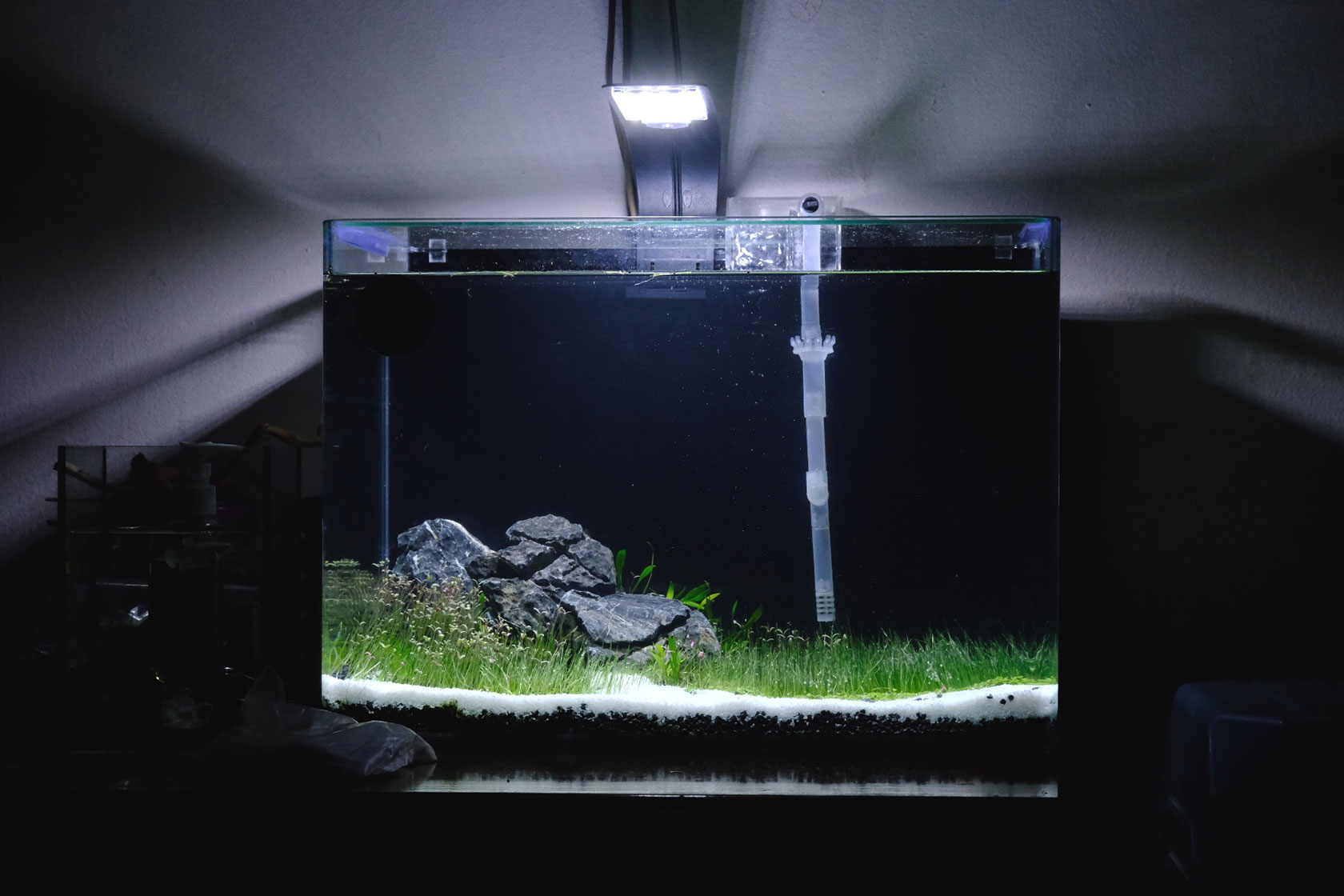 Basic Aquascape Betta Aquarium Setup Guide Ivanyolo
