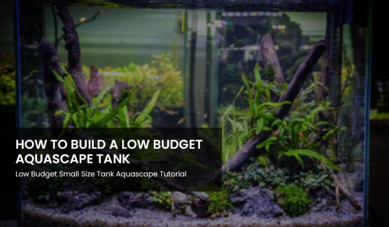 Build Low Budget Aquascape Tank
